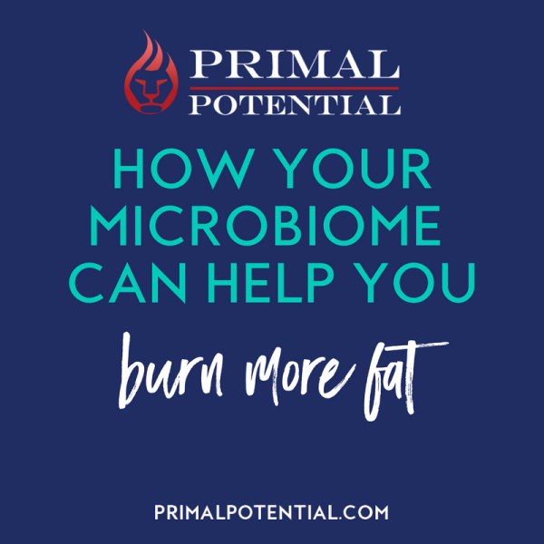 432: How Your Microbiome Can Help You Burn Fat