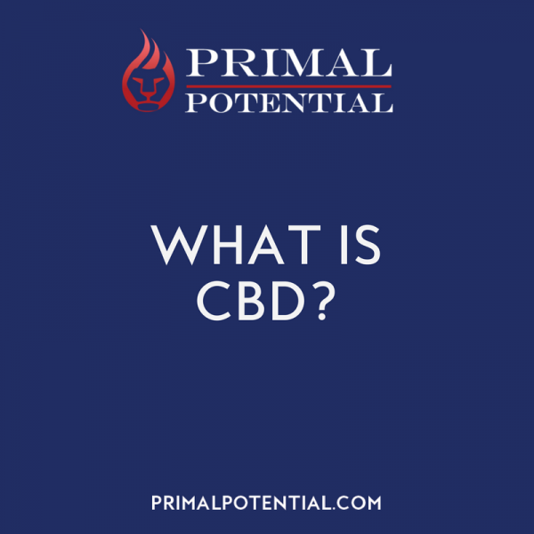 493: What Is CBD & Who Should Use It?