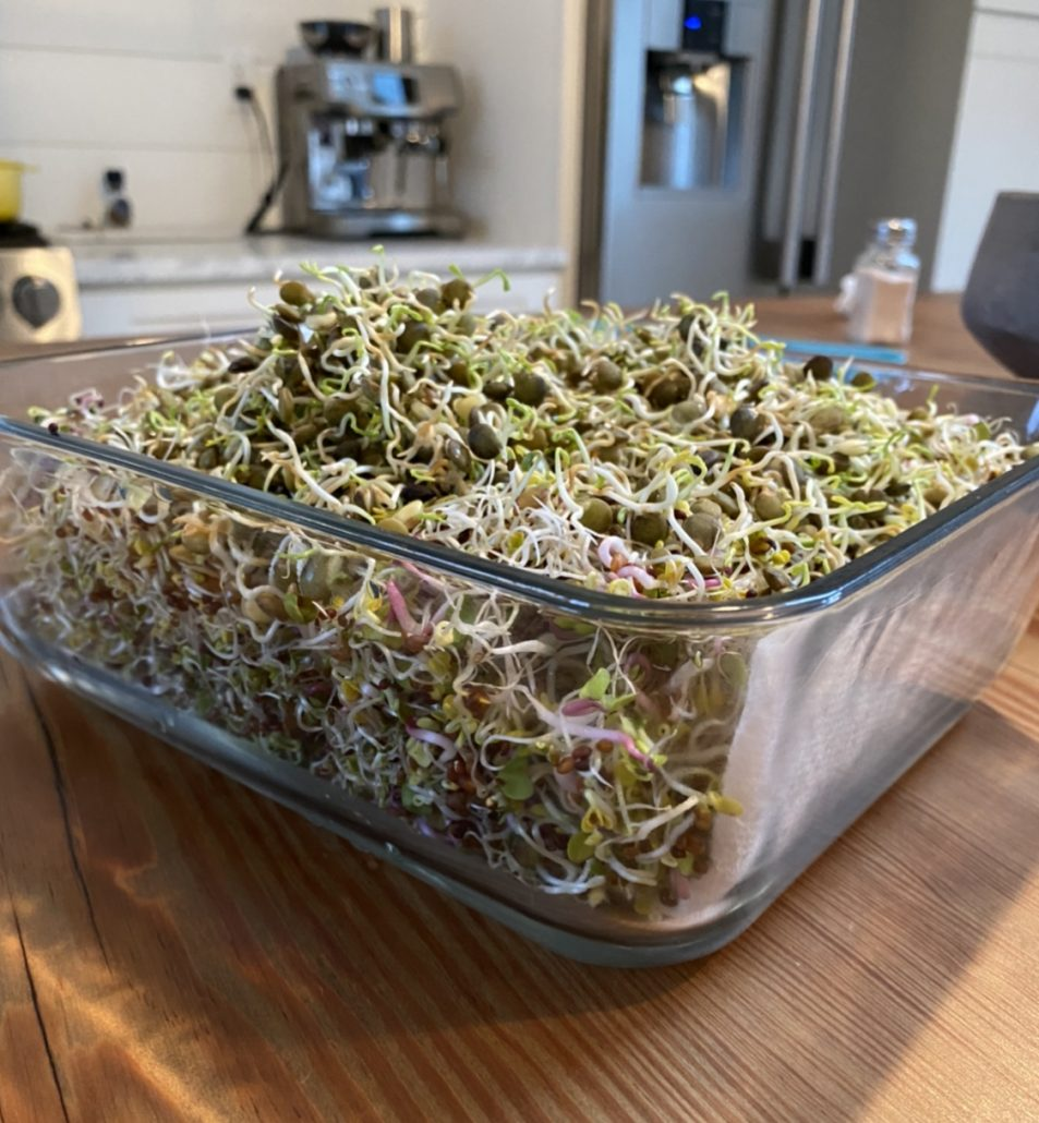 sprouts at home